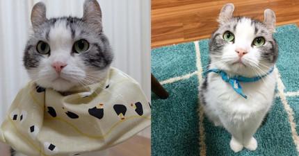 這隻貓咪只需要2張照片就可以讓你瞬間愛上他!