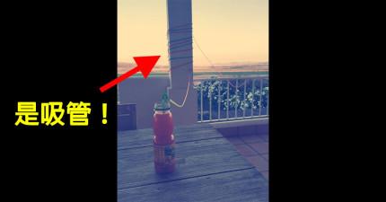 老爸在女兒5歲生日時幫她做了一個就算她躺在樓下都可以喝到飲料的「50公尺長超級無敵長吸管」!