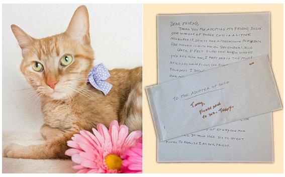這位將死的主人為了她害羞的貓咪,寫下一封給未來主人的超淚崩信件!