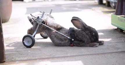 獸醫建議她把殘障兔子安樂死,但她完全不管...反倒是做了這個!