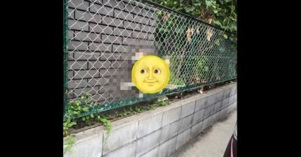 日本網友發現有個可憐小傢伙卡在圍欄上,但可愛破表程度讓他不知道該不該馬上救他...
