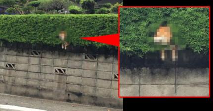 日本網友發現隔壁鄰居種植物居然種出了「一個超萌超疑惑的東西」。