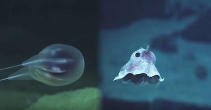 他們把一個防水攝影機丟到海裡,完全沒想到會拍到這些超神奇的畫面!