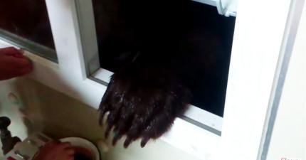 這名男人在煮飯時窗外猛然伸進一隻「巨大黑手」,他們反應證明戰鬥民族是最強的!