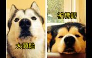 17隻「超能體會你生活到底有多辛苦」的爆笑可憐狗狗。
