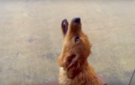 這隻狗狗第一次碰到下雨天的反應會讓你知道生活就該這麼過!