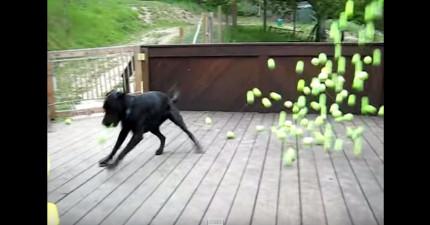 這隻狗狗中了狗狗界的六合彩,超開心表現會完全影響到你!