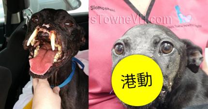 這隻狗狗曾經被虐待到只剩半張臉,但看他經過手術恢復可愛模樣讓人太開心了!