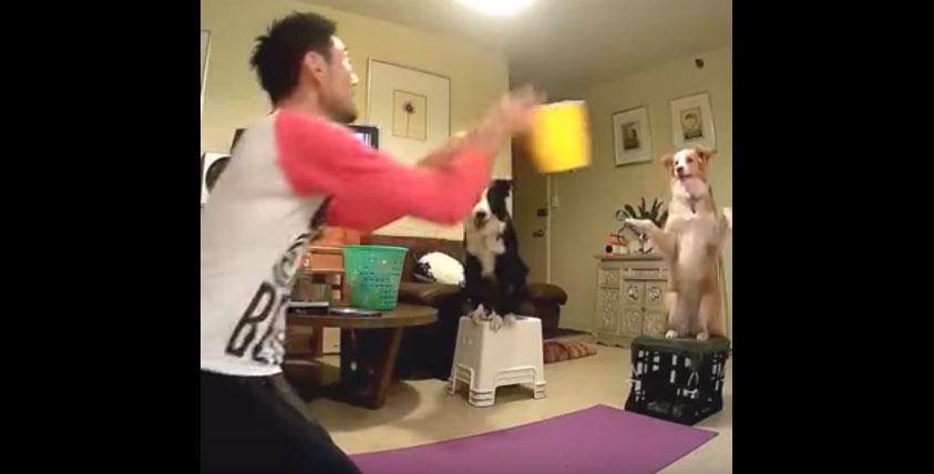狗狗把水桶接住還不是最可愛的,接下來遊戲才是最萌的重頭戲呢!