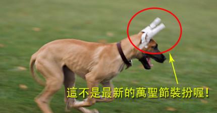 南韓的人現在自己整型還不夠,腦筋還動到他們的寵物身上!