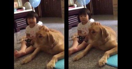 這個2歲小妹妹「幫偷吃東西被罵的狗狗求情」所說的話讓每個人都心軟原諒了!