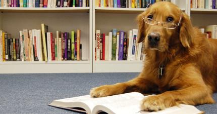 主人讓狗狗坐車之前忘了讓狗狗讀說明書了,結果...