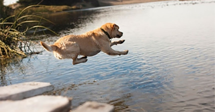 這隻狗狗一看到水池就太興奮跳進去,結果他超後悔的模樣讓我直接大聲「噗」出來了。