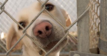 美國城市強制要求寵物店「只能販賣流浪動物」,但美國人道協會卻大力反對?!