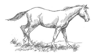 你會「畫馬」嗎?不會的話我們馬上用5個簡單步驟讓你立刻學會!