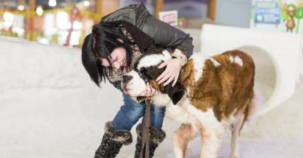 她為了完成癌末狗狗心願「讓夏天下雪了」,狗狗最後的反應會讓你哭到眼睛紅腫。