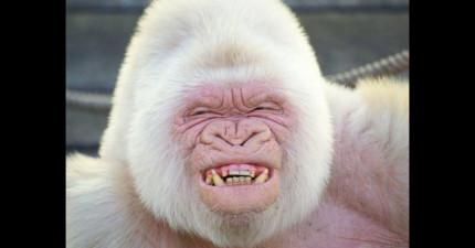 19隻比普通動物還要更完美的白化症神獸。