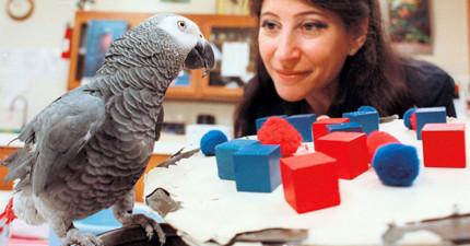 這隻鸚鵡是第一隻證明有靈魂的非人類動物,超聰明的舉動讓我看得瞠目結舌!