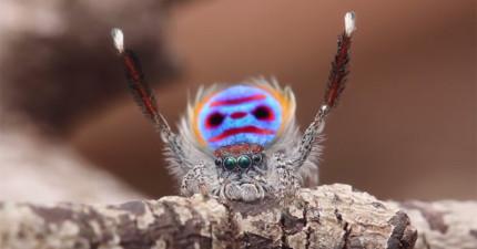 你可能很討厭蜘蛛,但等到音樂一下牠的動作會讓你不得不愛上牠!