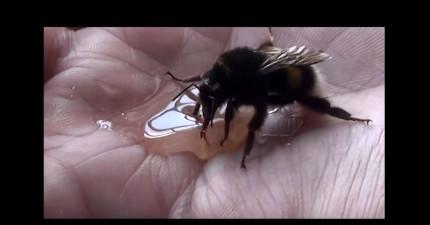 這個男生拯救了一隻蜜蜂之後,蜜蜂還感激到跟他擊掌!