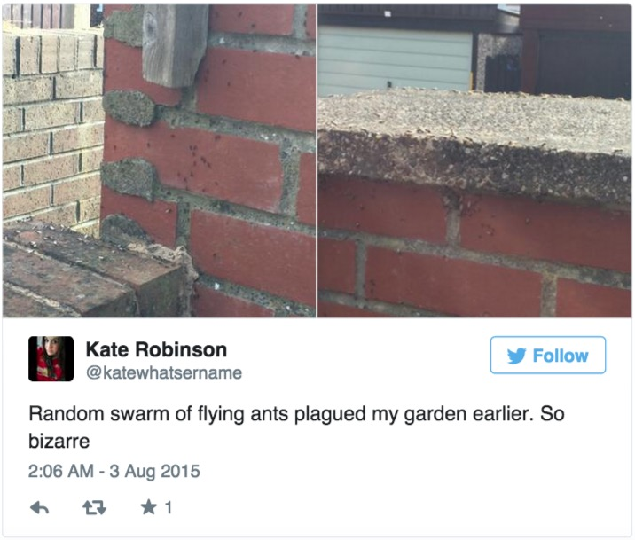 14張網友的求救照片證明了「有密集恐懼症的人現在不適合去英國」。