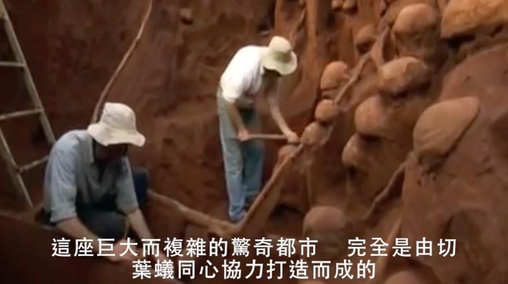 學者發現深8公尺的超巨大蟻窩,這座「螞蟻界萬里長城」出土時把大家都嚇了一跳...