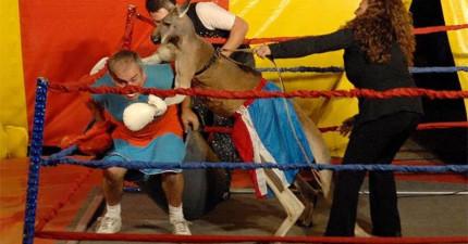 人類為了娛樂和袋鼠拳擊比賽的下場就是這樣...