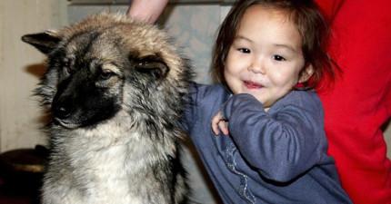 如果沒有這隻狗狗,才5歲的她根本就不可能在低溫多野獸和蟲的森林中存活12天。