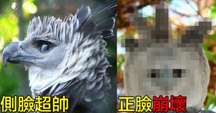 這種神話般巨型老鷹的側臉帥到讓人尖叫,但「正臉卻崩壞到讓人笑出來」...