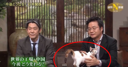 這個日本政治節目怕討論會太激烈,放一隻超可愛貓咪在現場化解任何負面情緒。