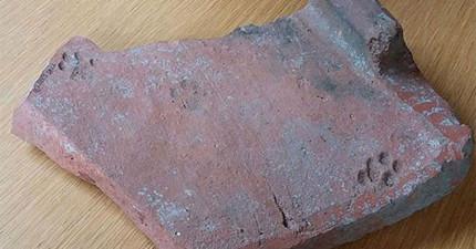 終於!考古學家找到了鐵證證明古代貓咪也一樣混帳。