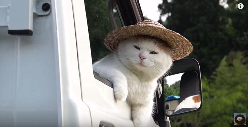 貓咪戴草帽