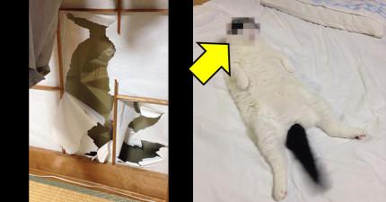 日本網友發現紙拉門被抓破後超生氣,但貓咪的「超爽表情」卻讓他瞬間氣消融化了...