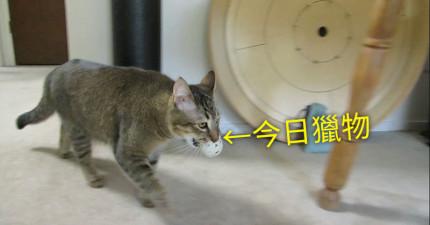 這名強者設計了「餵食神器」讓他的貓想吃飯還得先去「打獵」才行!