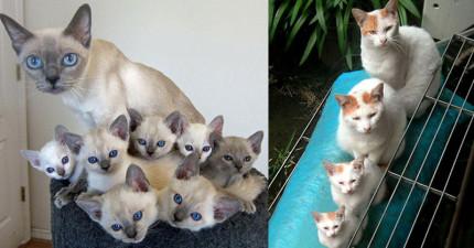 25張「一大一小但長相100%一樣」的爆炸可愛貓咪親子照!