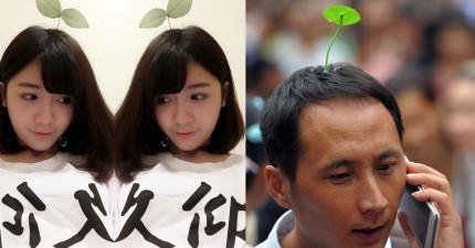 現在北京掀起了一陣「頭上種植物」時尚潮流,大人小孩都沒有倖免!