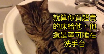 30個讓你超討厭但又暗中超愛的貓咪惡行。