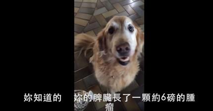 主人興奮告訴這隻狗狗「妳沒有癌症」之後,她的反應會讓人開心到瞬間融化!