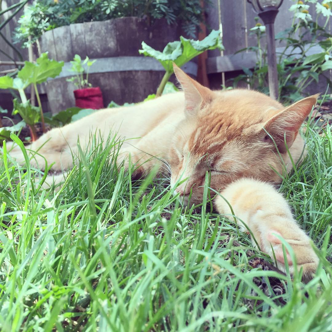 你絕對不會想要當這隻貓咪的鄰居,因為你會氣死!