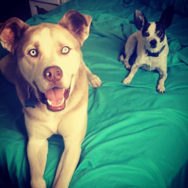 19隻踹飛純種迷思的「萌死人不償命」米克斯狗狗。