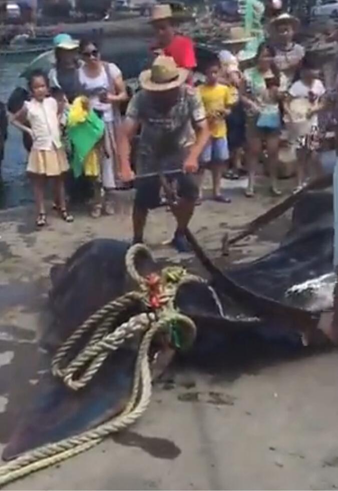 有人在中國直擊漁販將保育類鯨鯊被長刀切成一塊一塊,此時他的嘴巴還在動...