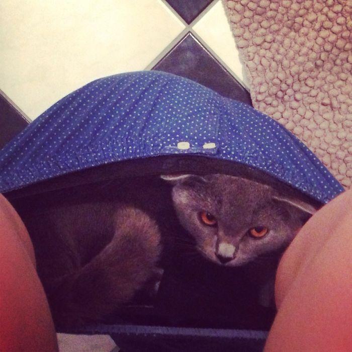 19隻全面佔領你內褲的「幹嘛?這本來就是我家」霸道貓咪。