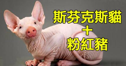 27種超不人道的「基因混種動物」絕對會讓你做惡夢。