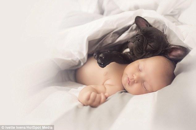 同天出生的小嬰兒和小法鬥寶寶以為是親生兄弟,離不開對方的模樣真的太可愛了!