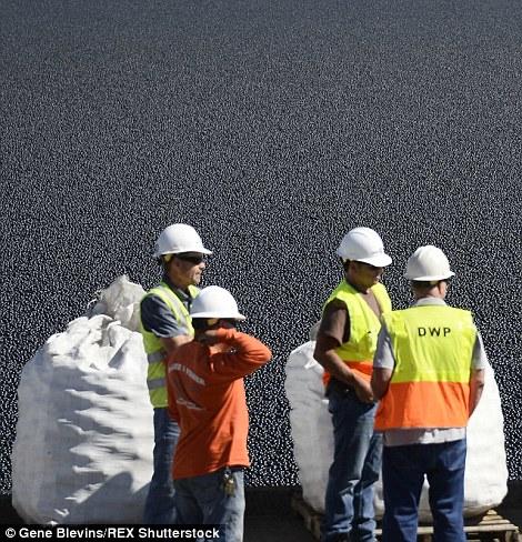 加州決定將「9600萬顆黑球」丟進水中來解決嚴重的缺水問題!
