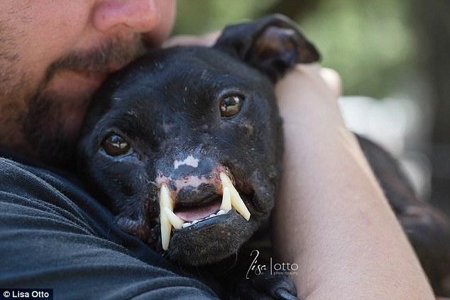 這隻狗狗經嚴重虐待讓她只剩下半張臉,但她內心的愛完整到會讓你想要為她喝采!
