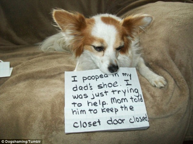 專家表示:別再因為狗狗這張「對不起」的臉,而繼續錯誤管教你家寶貝了!