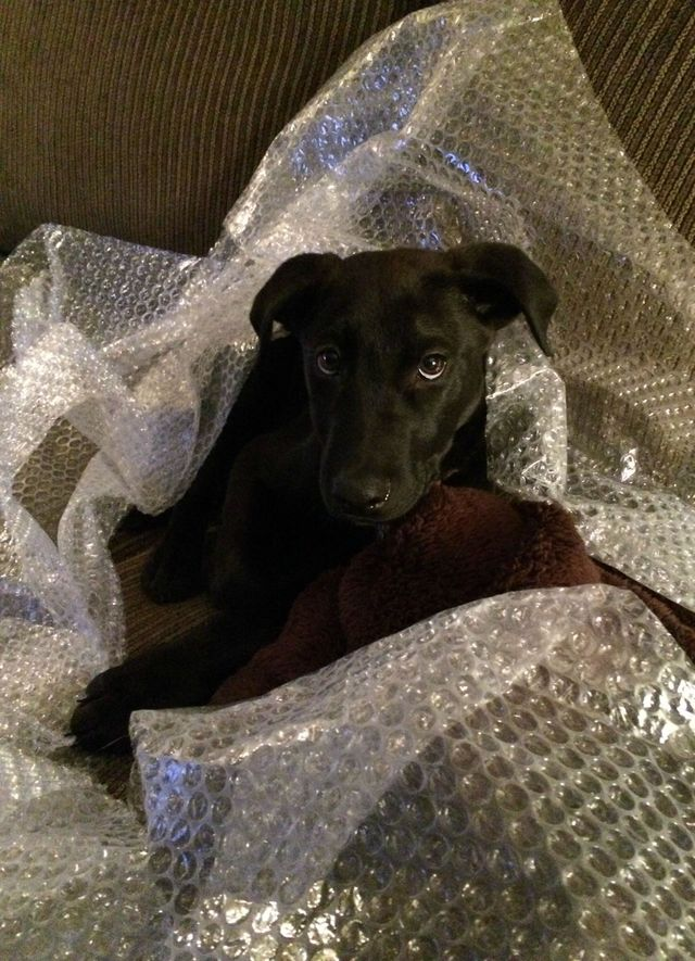 That horrible feeling you got when you learned that bubble-wrap was being discontinued.
