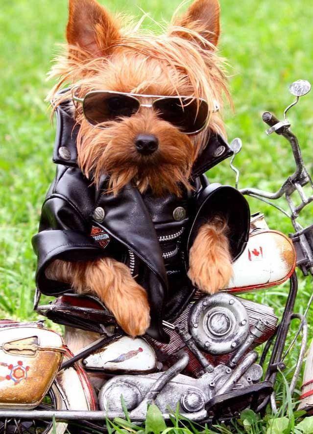 20隻「突然忘記自己是狗」的超享受人類生活可愛狗狗!