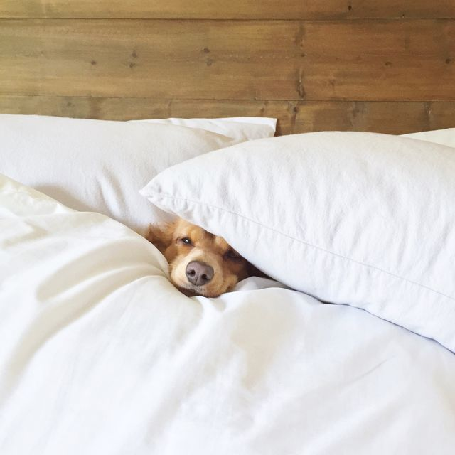 Struggling hard to get out of bed on Monday morning.